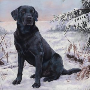 Pet Portrait Art Yorkshire