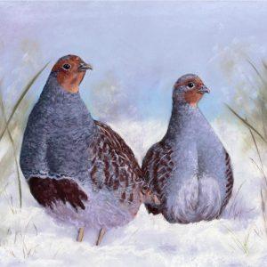English Partridge in Snow