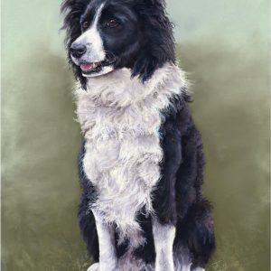 Pet Portrait Pastel Artist