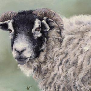 Swaledale Ewe Artwork