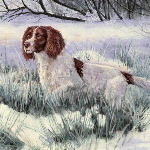 Springer Spaniel in Snow